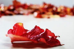 Single red leave Stock Photos
