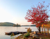 Single Red Maple Tree Next To Lake Dock Stock Photo