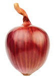 Single red onion Stock Image