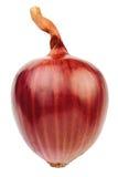 Single red onion Stock Image