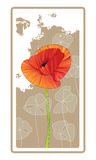 Single Red Orange Poppy. A single red orange poppy on a decorative tan background Stock Photo