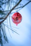 Single red ornament handing from pine tree branch in forest. In winter Stock Image