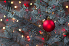 Single Red Ornament hanging from pine tree with glowing lights Stock Photos