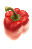 Single red pepper Stock Image