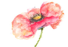 Single red poppy , Acrylic color painting Stock Images