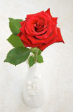 Single Red Rose. Close-up beautiful red rose in a white vase Royalty Free Stock Images