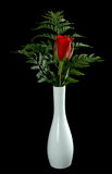 Single Red Rose. In a white vase Royalty Free Stock Photo