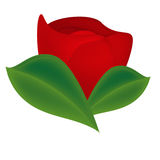 Single red rose. Illustration of single red rose in bloom with green leaves, isolated on white background Vector Illustration