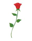 Single red rose Stock Image