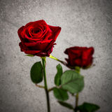 Single red rose against a textured background Stock Photos