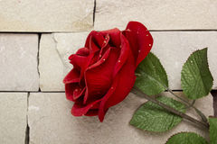 Single red rose against a textured background Stock Photo