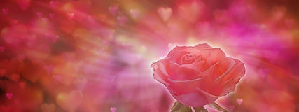 Single Red Rose banner. Red Rose head on a love heart background Stock Photography