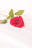 Single red rose on the bed Royalty Free Stock Photography