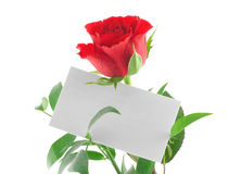 Single red rose with blank love note. On white background Royalty Free Stock Photo