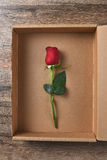 Single Red Rose Box Stock Photo
