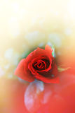 Single red rose flower in soft style Royalty Free Stock Photo