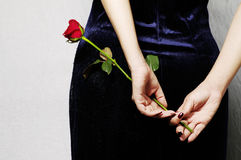 Single red rose in hand Royalty Free Stock Images