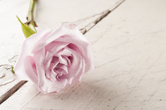 Single red rose over white wooden background. Royalty Free Stock Photography
