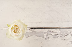 Single red rose over white wooden background. Stock Image