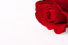 Single red rose page edge Stock Photo