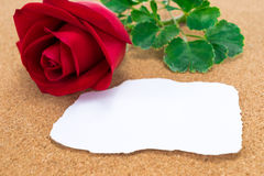 Single red rose with paper that was burnt at the edges, on corkb Stock Photography