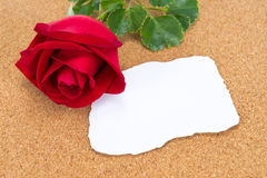 Single red rose with paper that was burnt at the edges rose on c Royalty Free Stock Photo