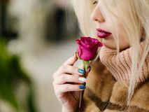 Single red rose romance soft fragrance. A gift of love. Young girl smelling soft subtle fragrance of a single red rose. Beauty of nature and person Stock Images