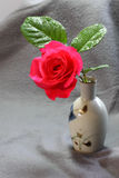 Single Red Rose. In a vase Stock Photos