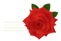 Single red rose vector Royalty Free Stock Image