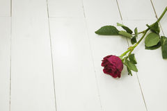 Single Red rose on white floorboards Royalty Free Stock Images
