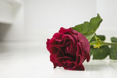 Single Red rose on white floorboards Stock Image