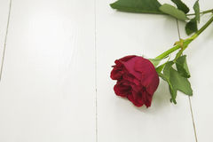 Single Red rose on white floorboards Stock Images
