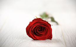 Single red rose on a wooden background. Stock Photo