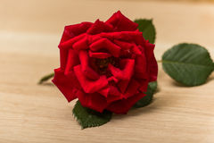 Single red rose on a wooden background. Royalty Free Stock Images