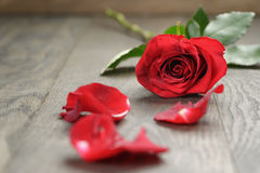 Single red rose on wooden table Stock Photo
