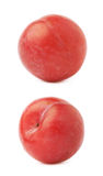 Single red victoria plum isolated Royalty Free Stock Image