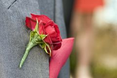 A single red wedding rose flower boutonnière pinned to grey suit jacket royalty free stock images