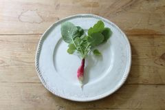 Single red and white radish on a handmade white plate on a rustic wood table. Horizontal aspect Stock Photo