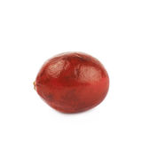 Single ripe cranberry isolated Royalty Free Stock Photography