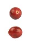 Single ripe cranberry isolated Royalty Free Stock Photos