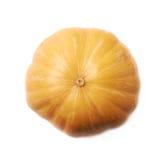 Single ripe orange pumpking isolated Royalty Free Stock Image