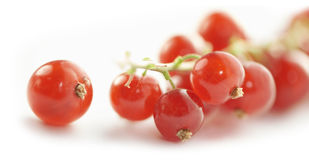 Single ripe red currant close up Royalty Free Stock Images