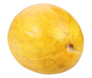 Single ripe yellow melon Stock Images