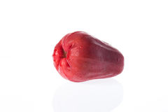 Single Rose apple Royalty Free Stock Images
