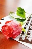Single rose and chocolate bar Stock Photos