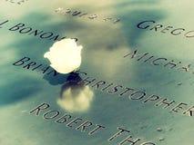 Single Rose Ground Zero stock photography