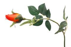Single rose isolated Royalty Free Stock Photography