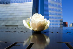 Single rose left at Ground Zero memorial Royalty Free Stock Photography