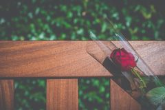 Single Bereavement Rose Stock Photos