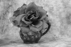 Single rose. A single rose  in a old creamer done in black and white Stock Photography